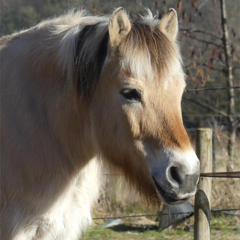 Paard Niels baat bij Phytonics Hypo balance
