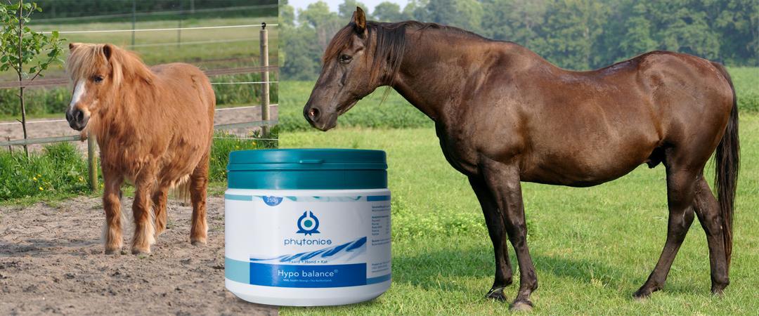 Hypo balance bij het oudere paard
